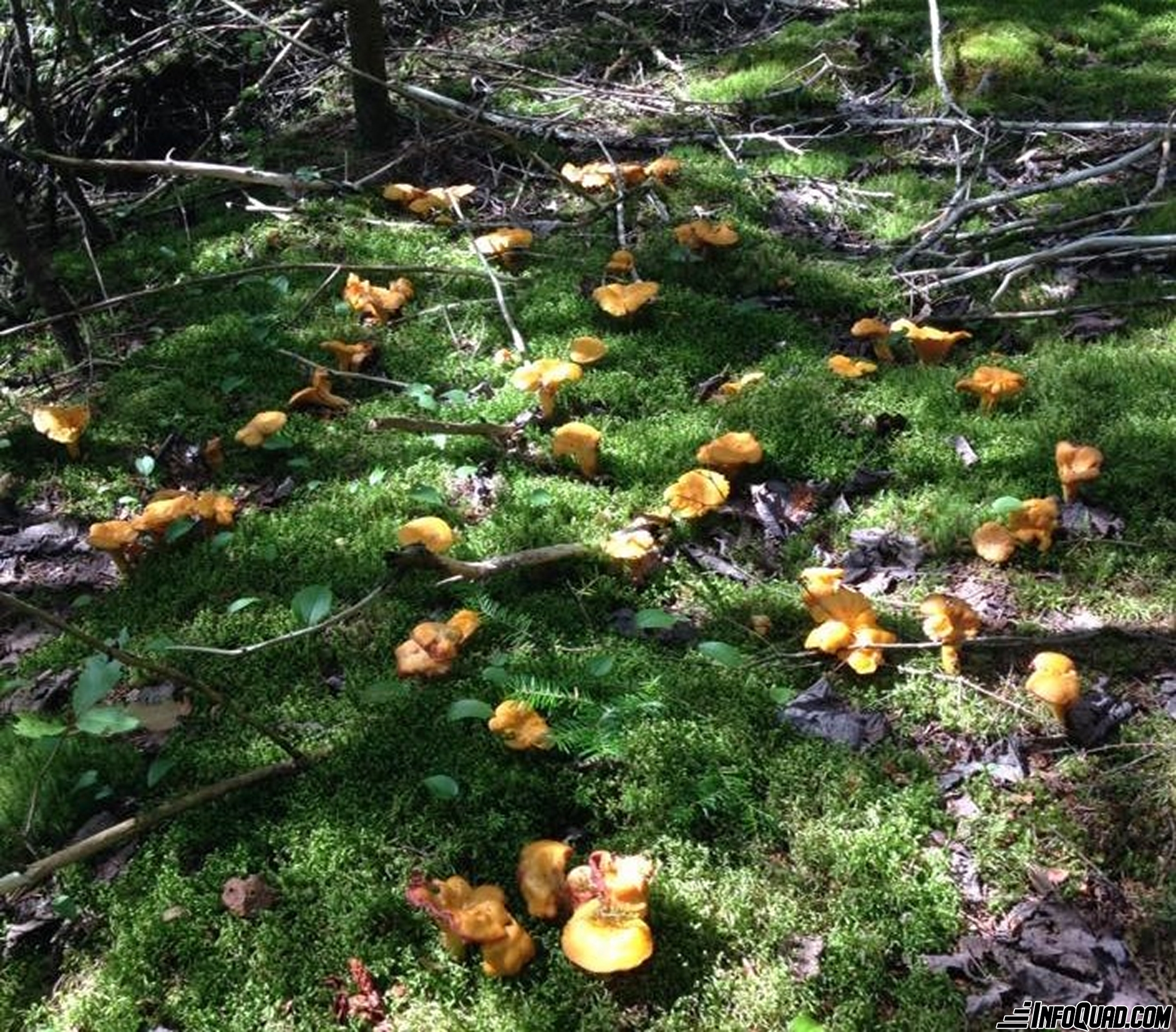 Taste the pleasures of the Quad: mycology on the trail